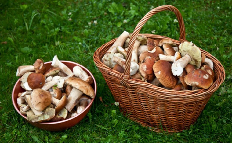 Как тулякам не отравиться грибами