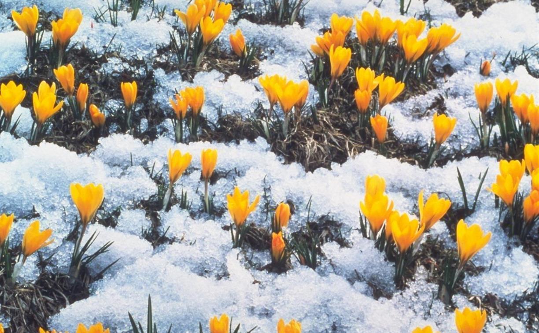 Погода в Туле 6 апреля: тепло, сухо и облачно