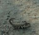 В Туле возле палатки с фруктами найден скорпион