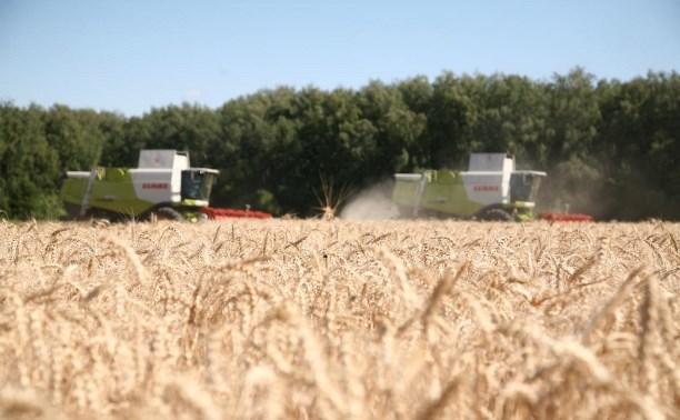 Посевные площади в Тульской области вырастут на 49 тысяч гектаров