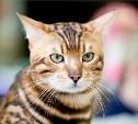 Тульский зооэкзотариум расскажет про кошек