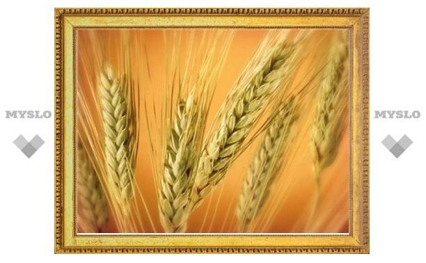 В Грузии застрахуют монастырский урожай пшеницы
