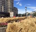 В центре Москвы вяжут в снопы тульскую пшеницу