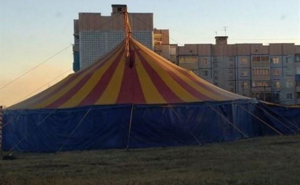 Нечем кормить животных: Бродячий цирк просит туляков о помощи