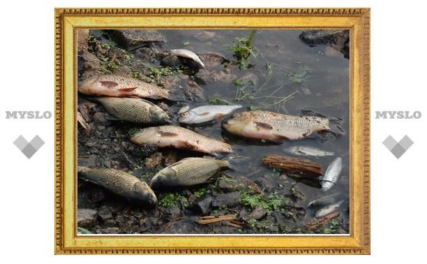 Упу превратили в зловонное болото