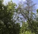 Как спилить ненужное дерево во дворе?