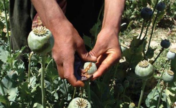 Жителя Донского будут судить за выращивание мака на даче