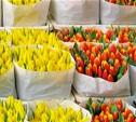В канун 8 Марта в Туле откроют цветочные базары