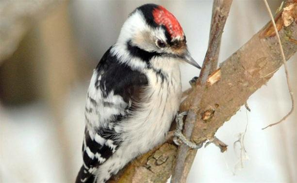 В Туле пройдет экологическая акция в защиту птиц