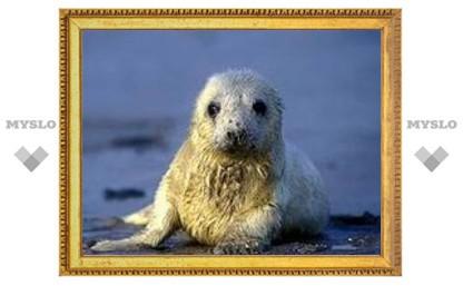 В центре Петербурга поймано редкое морское млекопитающее