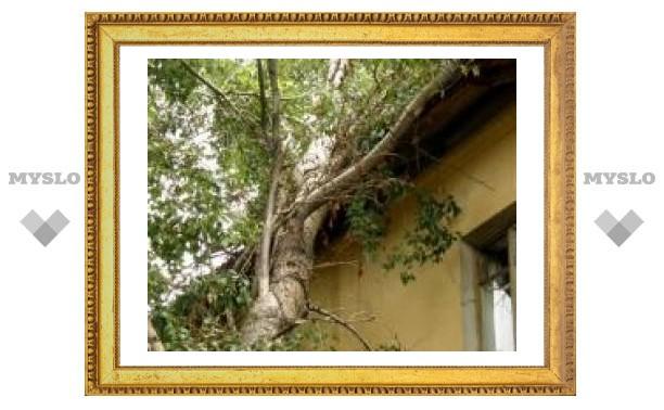 Почему в Туле не спиливают аварийные деревья