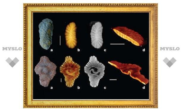Обнаружен самый ранний пример многоклеточного существа