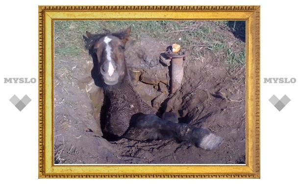 Спасенный жеребенок сутки провел в колодце