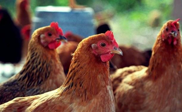 За кражу живности с фермы кимовчанин получил  почти 2,5 года «строгача»