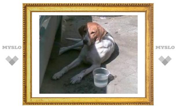 Собака ищет хозяина!