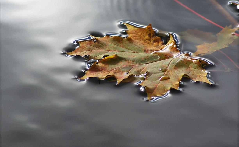 Погода в Туле 3 сентября: небольшой дождь, умеренный ветер, до +28 градусов