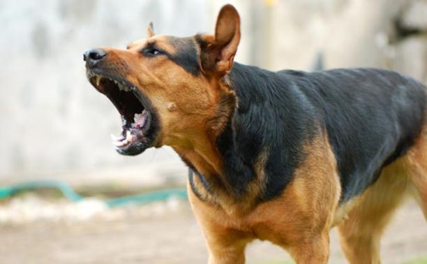 За выгул собак без намордников – штраф
