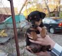 В тульский экзотариум подбросили щенков: помогите малышам найти дом!