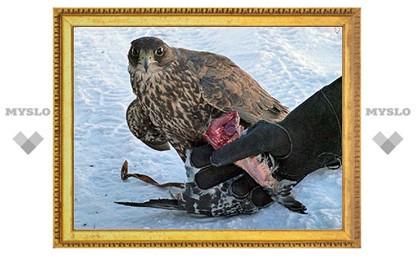 В Веневе начались Всероссийские состязания ловчих птиц