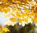 Погода в Туле 13 сентября: сухо, ветрено и тепло