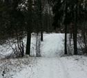 В феврале в Новомосковском парке откроют лыжероллерную трассу