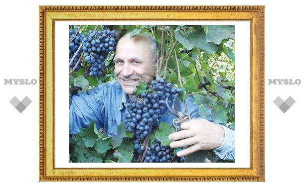 «Черный жемчуг» – виноградная драгоценность