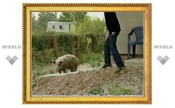 В поволжском селе Малая Хомутерь свинья затоптала вора насмерть