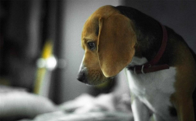 Депутаты предлагают запретить тестирование на животных