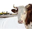 Тульская область взяла «бронзу» по уровню жизни в сельской местности