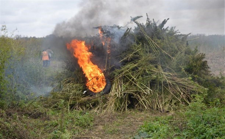 Полицейский рейд в Тульской области: полиция уничтожает посевы конопли и мака