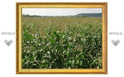 В Тульской области в 25 раз увеличен посев кукурузы