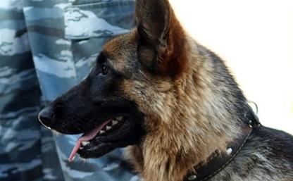 Полицейская овчарка помогла задержать серийных воров