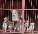 Туляков просят помочь кормом приюту для бездомных собак