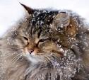 Погода в Туле 10 января: облачность, снег и лёгкий мороз