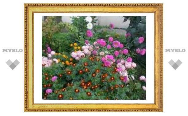 В Туле высадят 2 миллиона цветов
