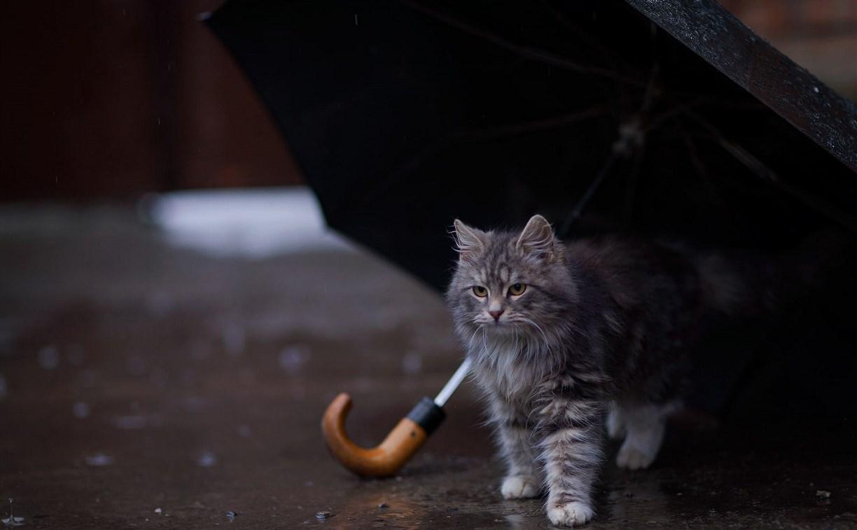 Погода в Туле 15 августа: дождь, тепло и летняя гроза