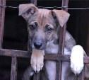 За выкидывание животных на улицу могут ввести уголовное наказание