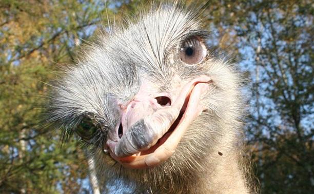 В зооуголке Центрального парка поселились аисты и страусята