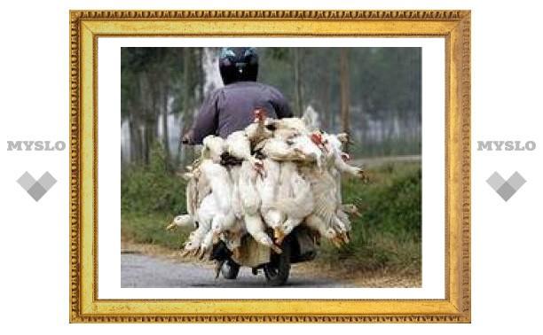 Вспышка птичьего гриппа в Ростовской области