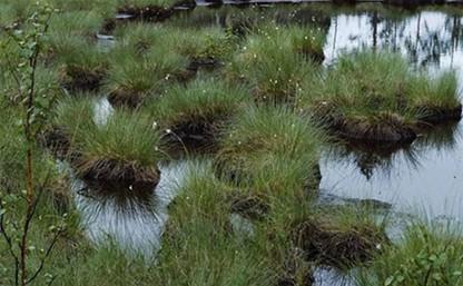В болоте под Тулой найдено тело ребенка