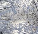 Погода в Туле 27 января: скользко, небольшие осадки и порывистый ветер