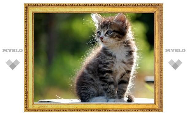 В Туле котята ищут хозяев