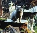 В городском парке Новомосковска нашли кладбище домашних животных