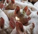 В Ясногорском районе сотрудники МЧС ликвидировали чумных свиней