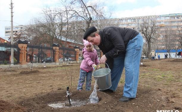 В сквере «Тульское чаепитие» снова будут сажать вишни