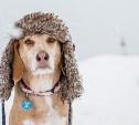 Погода в Туле на 10 февраля: небольшой снег и до -5 градусов