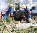 Спасатели вывозят поваленные деревья с Казанской набережной: фоторепортаж