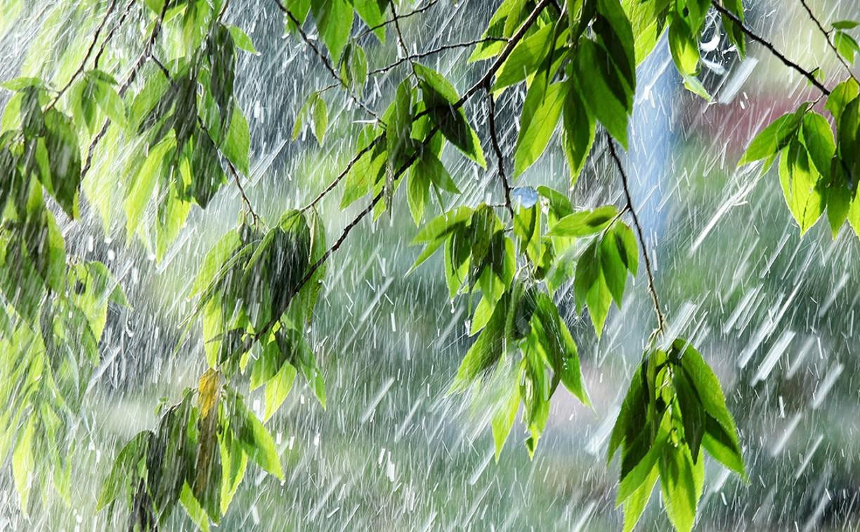 Погода в Туле 31 августа: туман, дождь и грозы