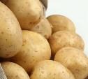 В Тульской области собрали 308 000 тонн картофеля
