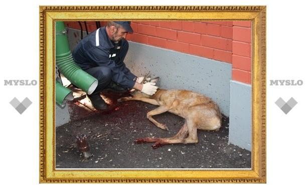 В Тульском зооуголке бродячие собаки загрызли косулю